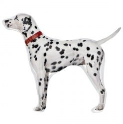 Dalmation helium filled foil balloon